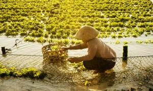 Seaweed Farm Lembongan