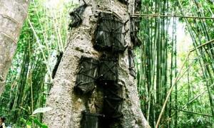 Tara Tree or Baby Grave